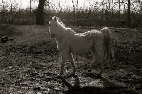 Grandpa's old girl, November 2011 - Dirty from the cold, wet winter